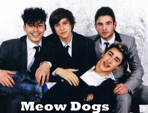 Meow Dogs
